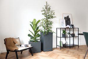 Interiorfotografie Wohnzimmer mit Pflanzgefäßen im Japandi Look